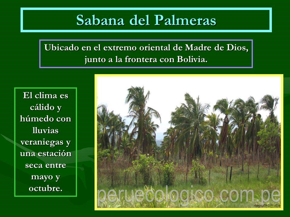 Sabana del Palmeras Ubicado en el extremo oriental de Madre de Dios, junto a la frontera con Bolivia. El clima es cálido y húmedo con lluvias veranieg