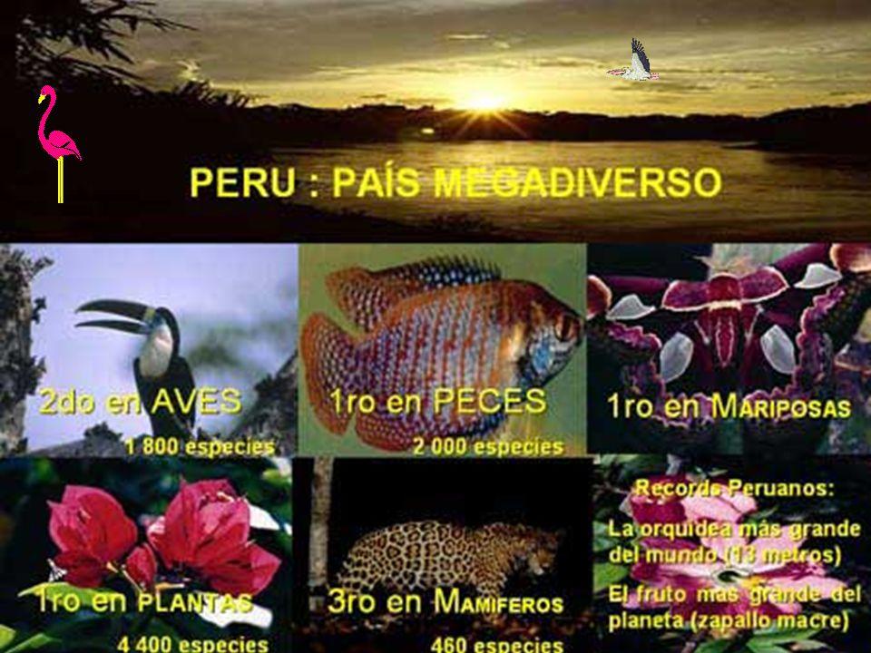 Reservas Nacionales Nombre Localización (departmento)Ecorregión Pampa GalerasAyucuchoPuna de los Andes centrales JunínJunín y PascoPuna de los Andes centrales ParacasIcaDesierto de Sechura LachayLimaDesierto de Sechura TiticacaPunoPuna de los Andes centrales CalipuyLa Libertad Páramo de la Cordillera Central Pacaya- SamiriaLoreto Bosques húmedos del río Ucayali