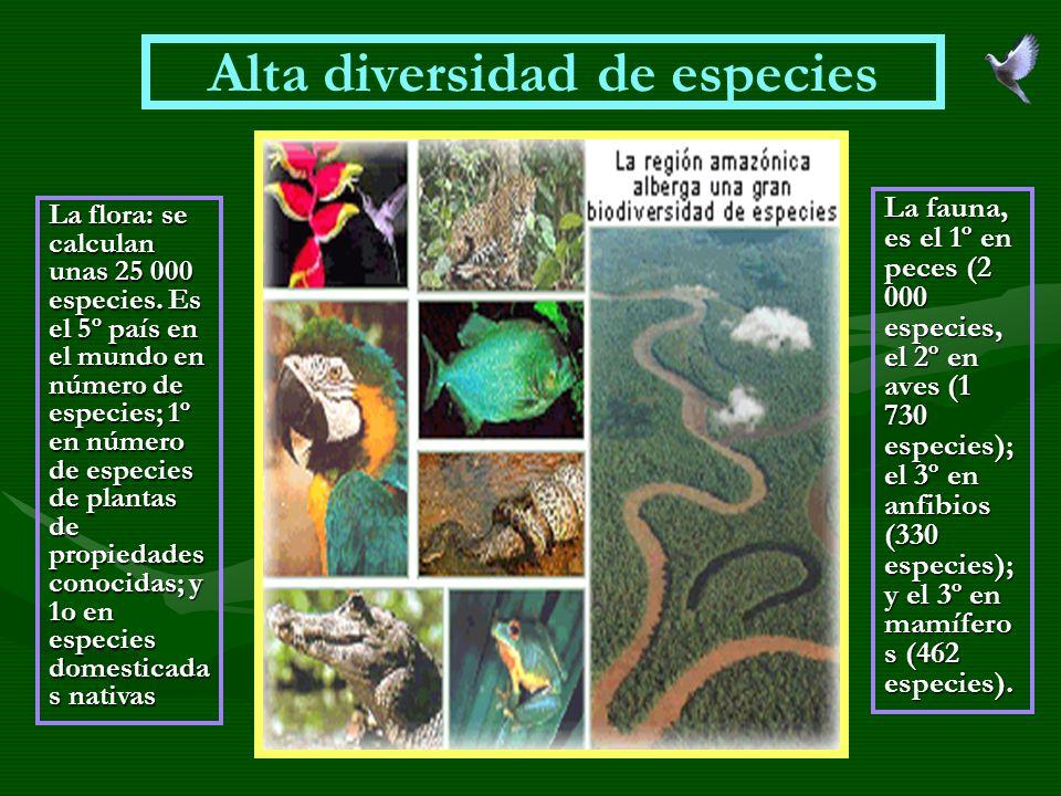 Alta diversidad de especies La flora: se calculan unas 25 000 especies. Es el 5º país en el mundo en número de especies; 1º en número de especies de p