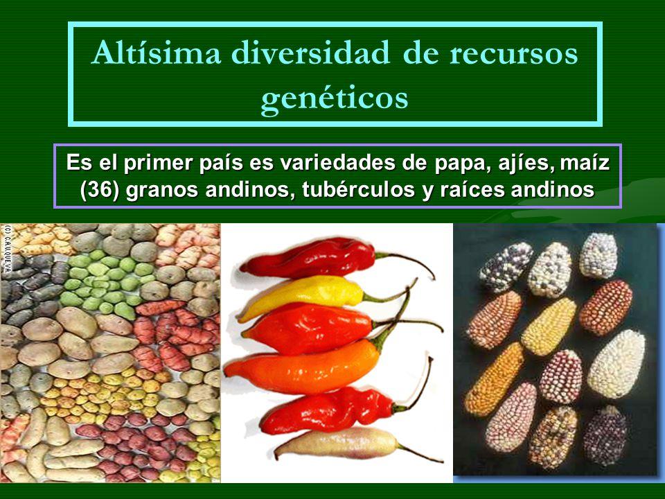 Altísima diversidad de recursos genéticos Es el primer país es variedades de papa, ajíes, maíz (36) granos andinos, tubérculos y raíces andinos