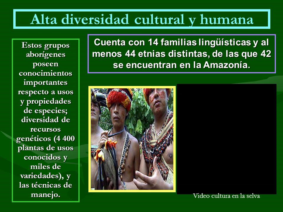 Alta diversidad cultural y humana Estos grupos aborígenes poseen conocimientos importantes respecto a usos y propiedades de especies; diversidad de re