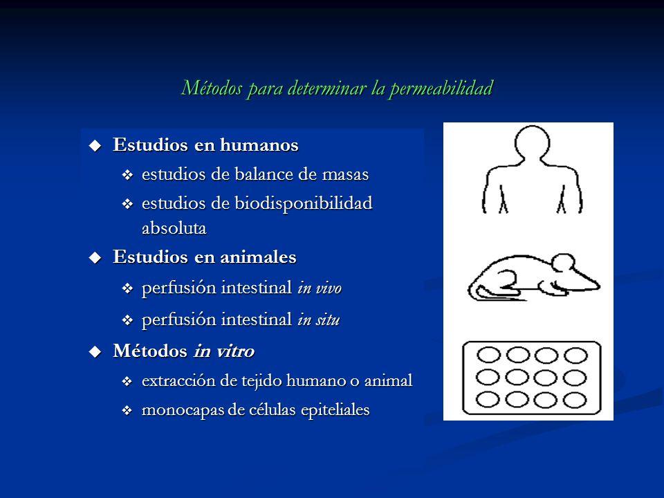 Métodos para determinar la permeabilidad u Estudios en humanos v estudios de balance de masas v estudios de biodisponibilidad absoluta u Estudios en a