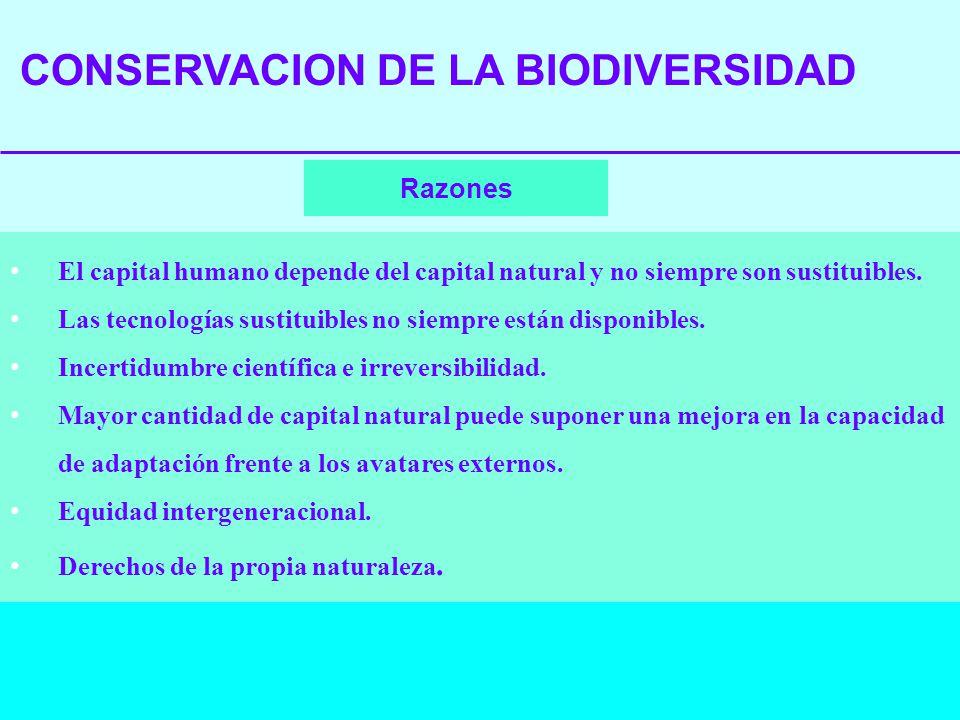 CONSERVACION DE LA BIODIVERSIDAD Razones El capital humano depende del capital natural y no siempre son sustituibles. Las tecnologías sustituibles no
