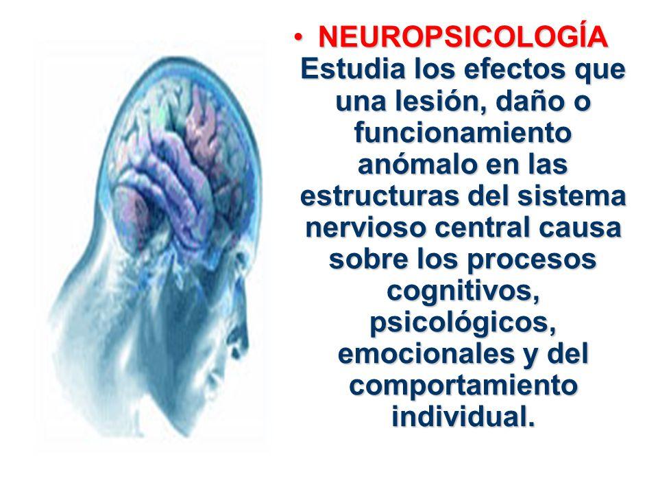 NEUROPSICOLOGÍA Estudia los efectos que una lesión, daño o funcionamiento anómalo en las estructuras del sistema nervioso central causa sobre los proc