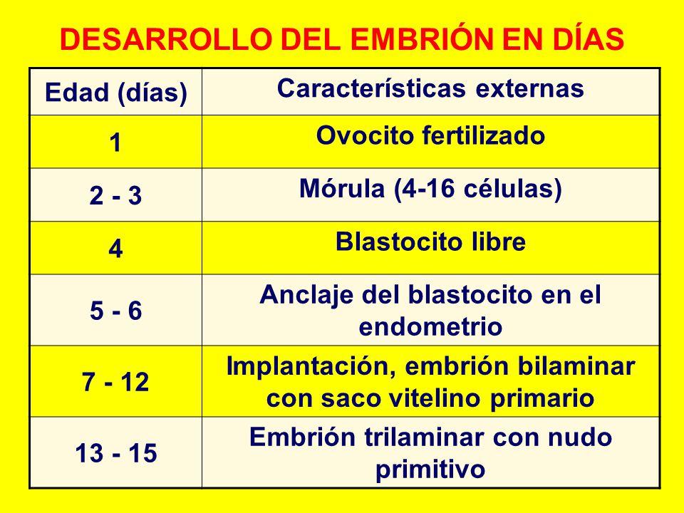 DESARROLLO DEL EMBRIÓN EN DÍAS Edad (días) Características externas 1 Ovocito fertilizado 2 - 3 Mórula (4-16 células) 4 Blastocito libre 5 - 6 Anclaje
