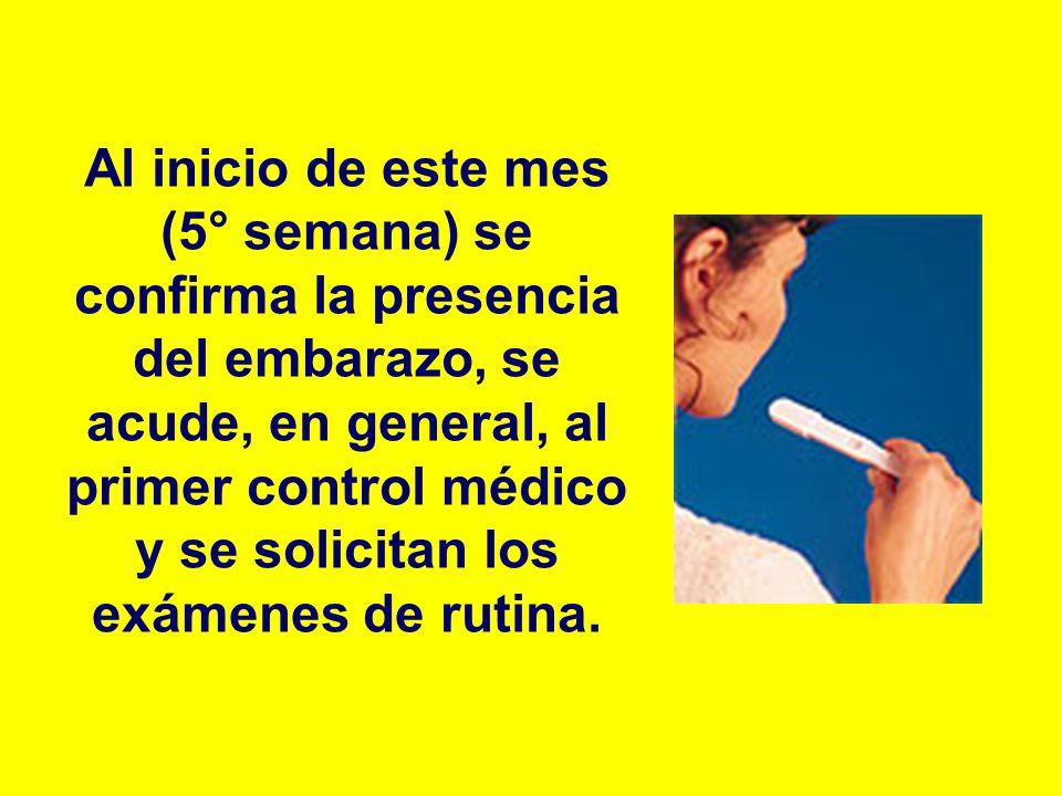 Al inicio de este mes (5° semana) se confirma la presencia del embarazo, se acude, en general, al primer control médico y se solicitan los exámenes de