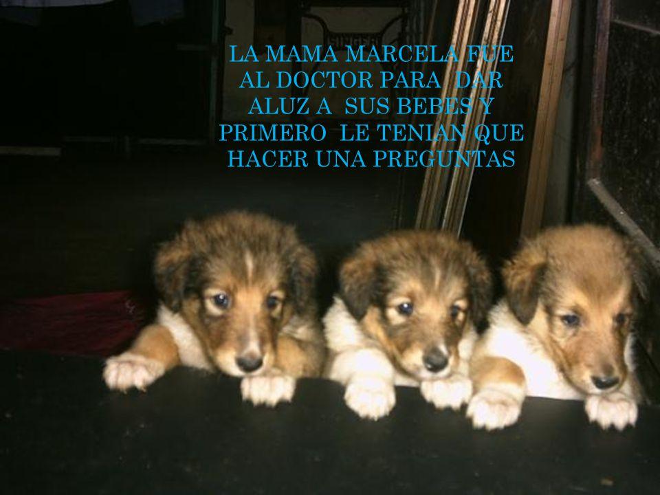 Los tres gemelos UN DIA MUY SOLEADO LA MAMA MARCELA ESTABA EMBARASADA Y LA MAMA MARCELA YA IVA A DAR EN VIDA A SUS BEBE S