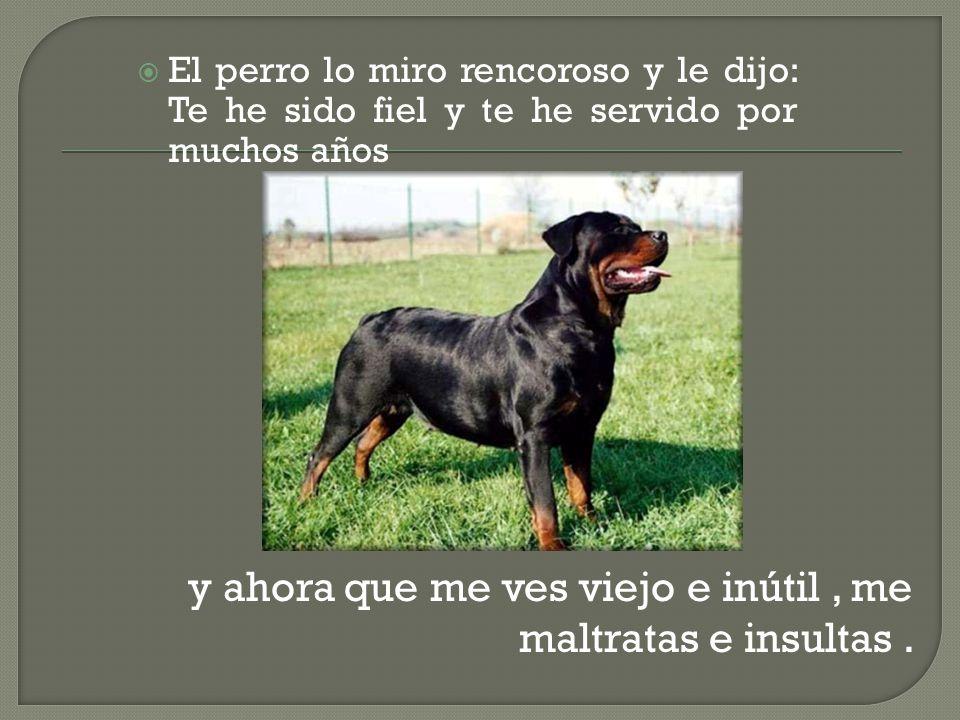El perro lo miro rencoroso y le dijo: Te he sido fiel y te he servido por muchos años y ahora que me ves viejo e inútil, me maltratas e insultas.