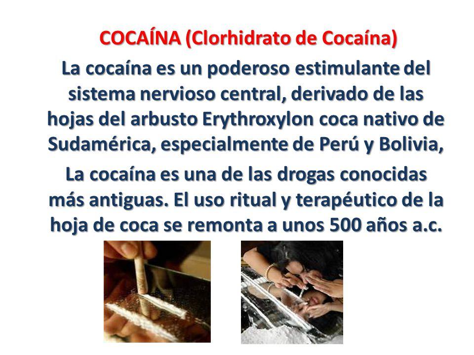 COCAÍNA (Clorhidrato de Cocaína) La cocaína es un poderoso estimulante del sistema nervioso central, derivado de las hojas del arbusto Erythroxylon co