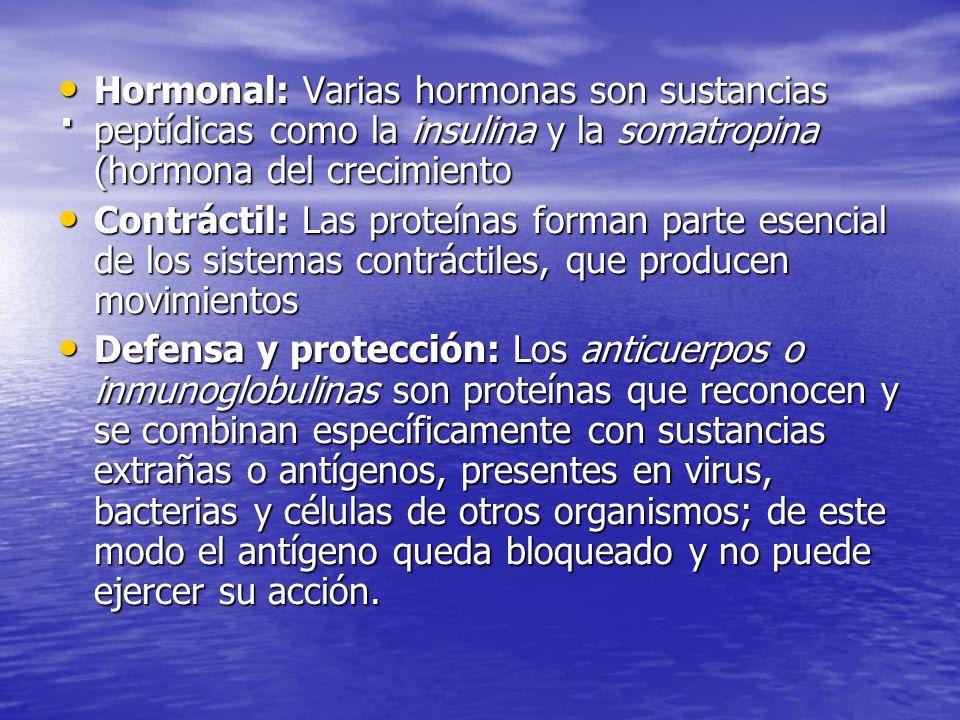 Hormonal: Varias hormonas son sustancias peptídicas como la insulina y la somatropina (hormona del crecimiento Hormonal: Varias hormonas son sustancias peptídicas como la insulina y la somatropina (hormona del crecimiento Contráctil: Las proteínas forman parte esencial de los sistemas contráctiles, que producen movimientos Contráctil: Las proteínas forman parte esencial de los sistemas contráctiles, que producen movimientos Defensa y protección: Los anticuerpos o inmunoglobulinas son proteínas que reconocen y se combinan específicamente con sustancias extrañas o antígenos, presentes en virus, bacterias y células de otros organismos; de este modo el antígeno queda bloqueado y no puede ejercer su acción.