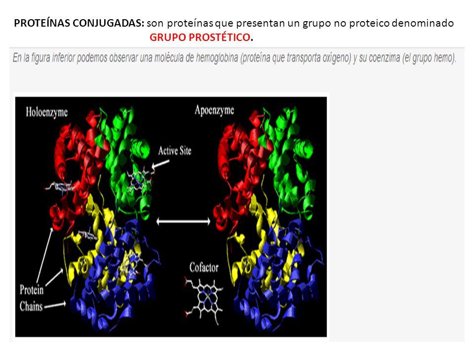 PROTEÍNAS CONJUGADAS: son proteínas que presentan un grupo no proteico denominado GRUPO PROSTÉTICO.