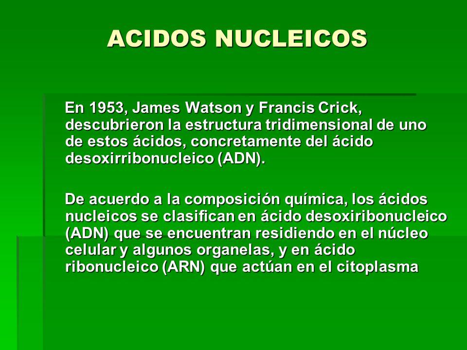 ACIDOS NUCLEICOS En 1953, James Watson y Francis Crick, descubrieron la estructura tridimensional de uno de estos ácidos, concretamente del ácido desoxirribonucleico (ADN).