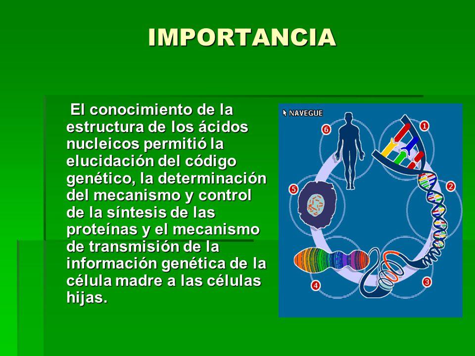 IMPORTANCIA El conocimiento de la estructura de los ácidos nucleicos permitió la elucidación del código genético, la determinación del mecanismo y control de la síntesis de las proteínas y el mecanismo de transmisión de la información genética de la célula madre a las células hijas.