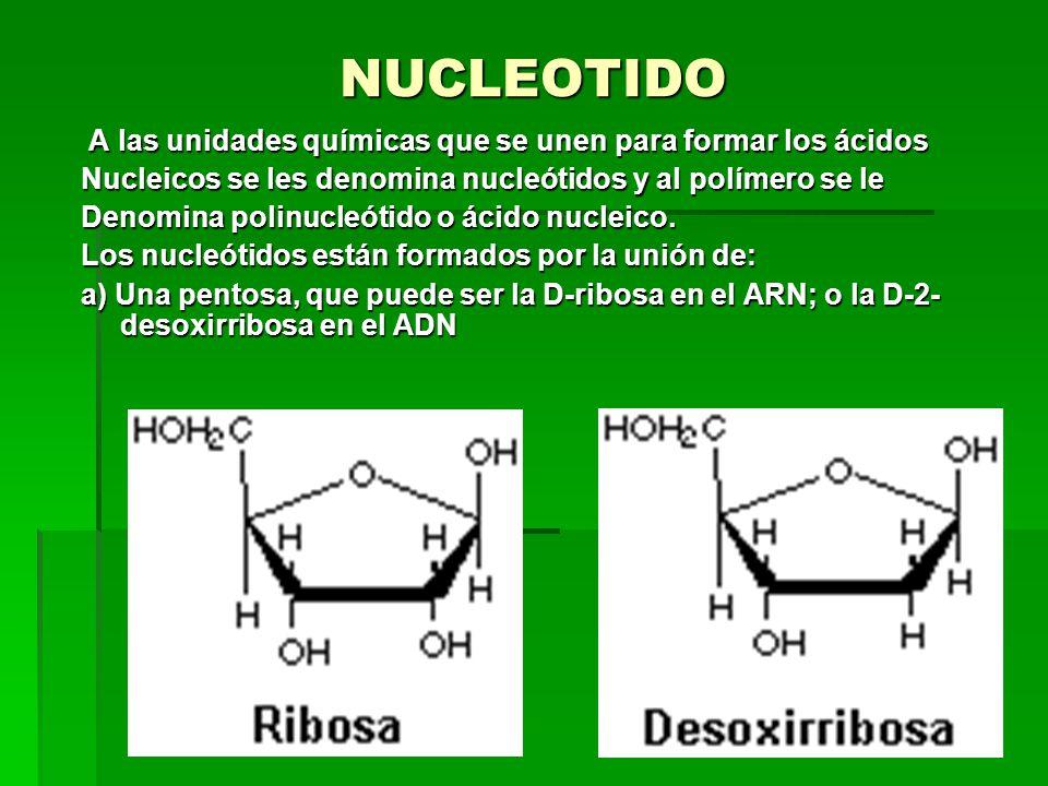 NUCLEOTIDO A las unidades químicas que se unen para formar los ácidos A las unidades químicas que se unen para formar los ácidos Nucleicos se les denomina nucleótidos y al polímero se le Denomina polinucleótido o ácido nucleico.