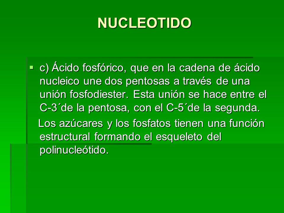 NUCLEOTIDO c) Ácido fosfórico, que en la cadena de ácido nucleico une dos pentosas a través de una unión fosfodiester. Esta unión se hace entre el C-3