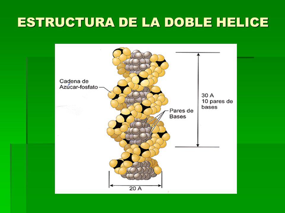 ESTRUCTURA DE LA DOBLE HELICE
