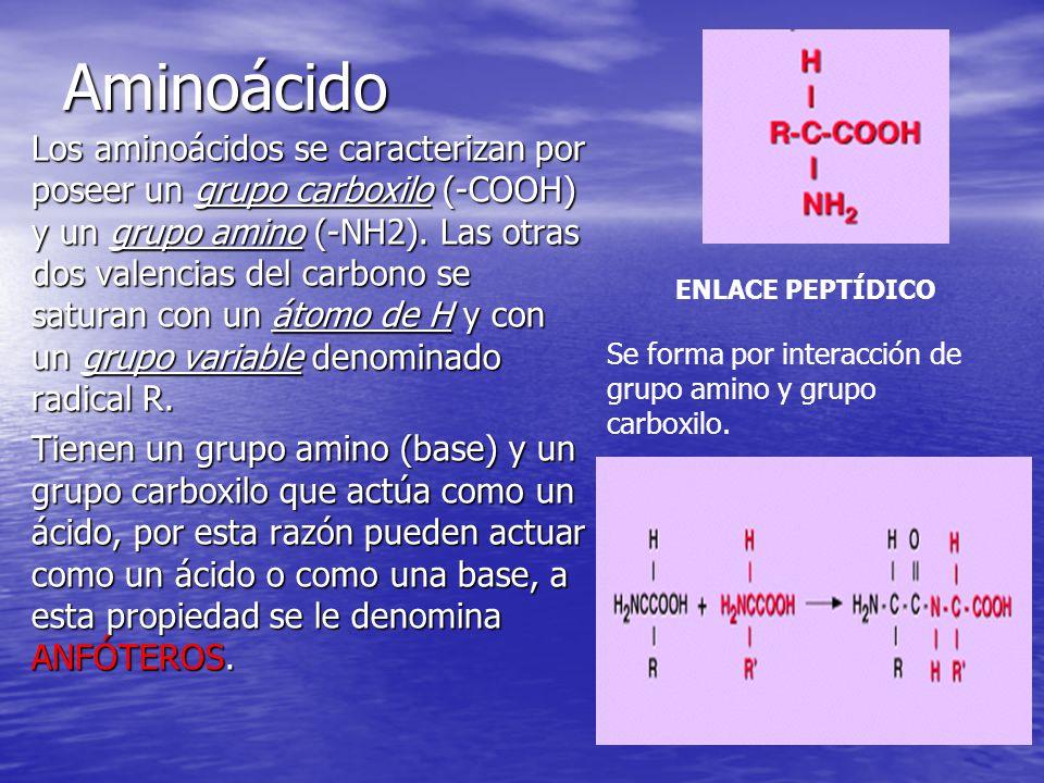 Aminoácido Los aminoácidos se caracterizan por poseer un grupo carboxilo (-COOH) y un grupo amino (-NH2). Las otras dos valencias del carbono se satur