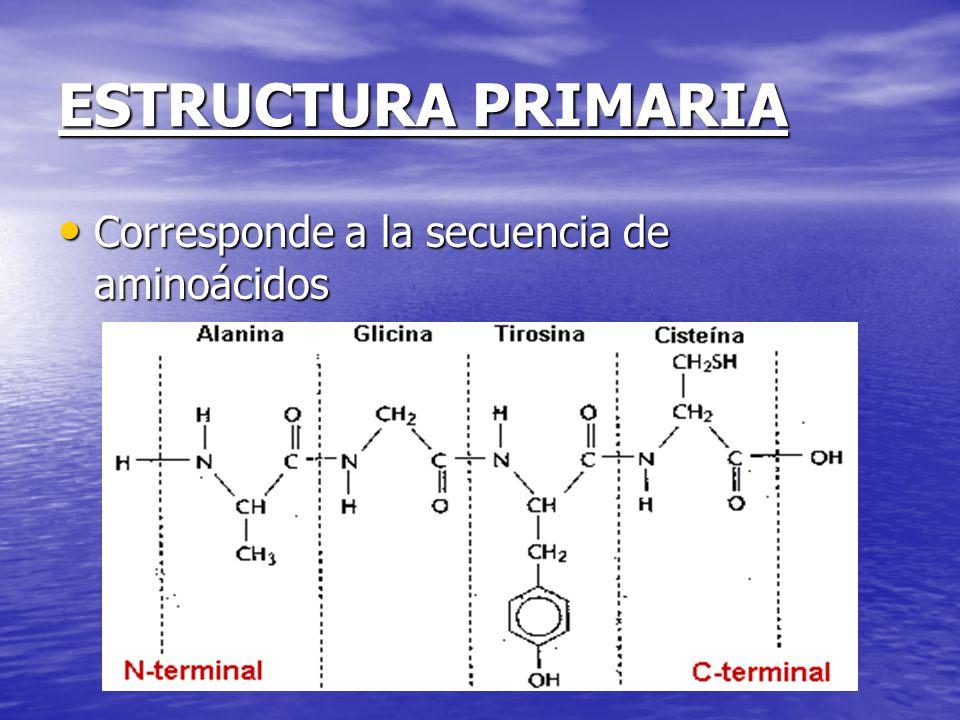 ESTRUCTURA PRIMARIA Corresponde a la secuencia de aminoácidos Corresponde a la secuencia de aminoácidos