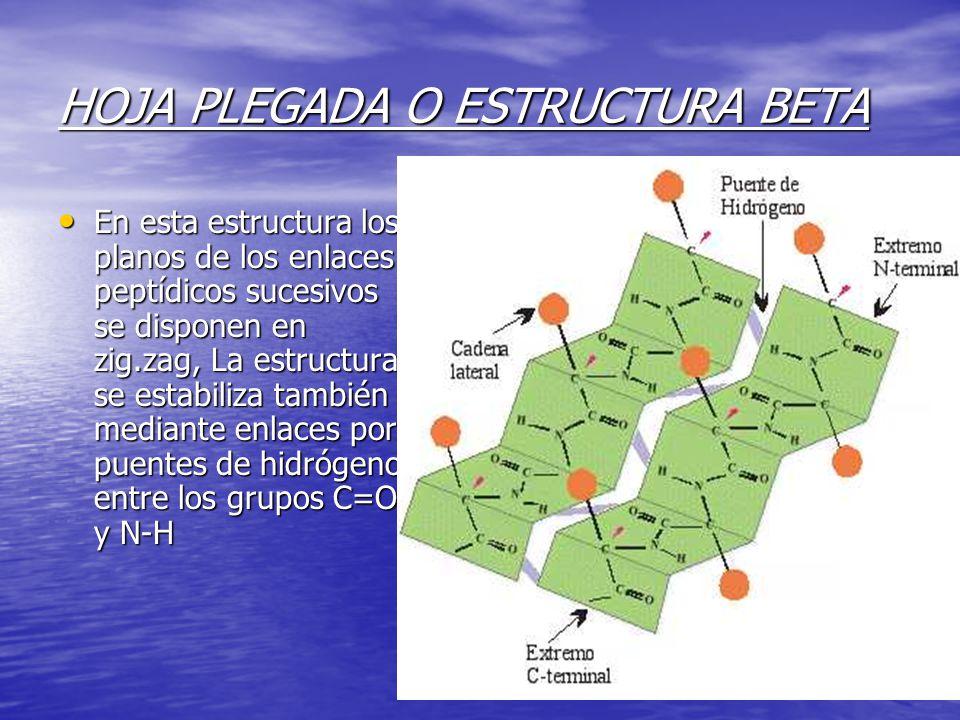 HOJA PLEGADA O ESTRUCTURA BETA En esta estructura los planos de los enlaces peptídicos sucesivos se disponen en zig.zag, La estructura se estabiliza también mediante enlaces por puentes de hidrógeno entre los grupos C=O y N-H En esta estructura los planos de los enlaces peptídicos sucesivos se disponen en zig.zag, La estructura se estabiliza también mediante enlaces por puentes de hidrógeno entre los grupos C=O y N-H