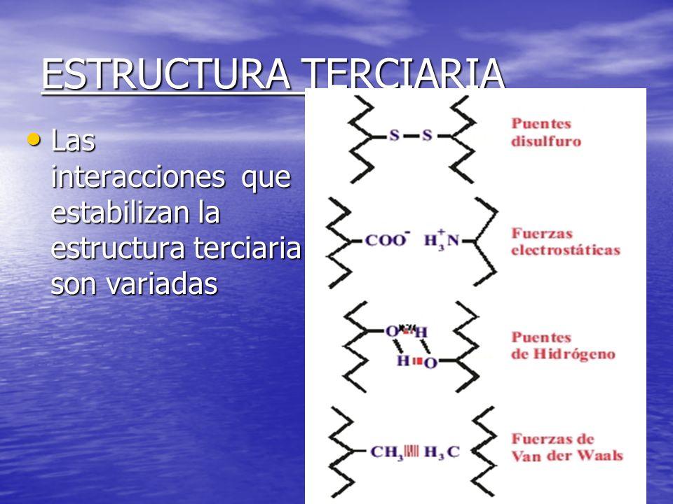 ESTRUCTURA TERCIARIA Las interacciones que estabilizan la estructura terciaria son variadas Las interacciones que estabilizan la estructura terciaria son variadas