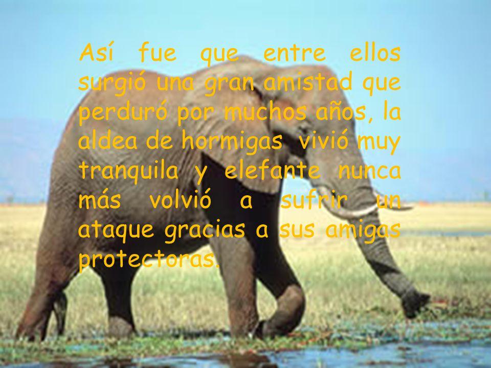elefante se reunieron en la aldea; el elefante agradeció a las hormigas por haberle salvado la vida y las hormigas le agradecieron por haber ayudado a