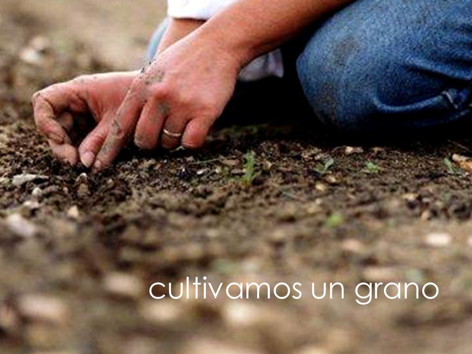 cultivamos un grano