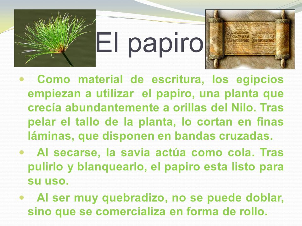 El papiro Como material de escritura, los egipcios empiezan a utilizar el papiro, una planta que crecía abundantemente a orillas del Nilo. Tras pelar