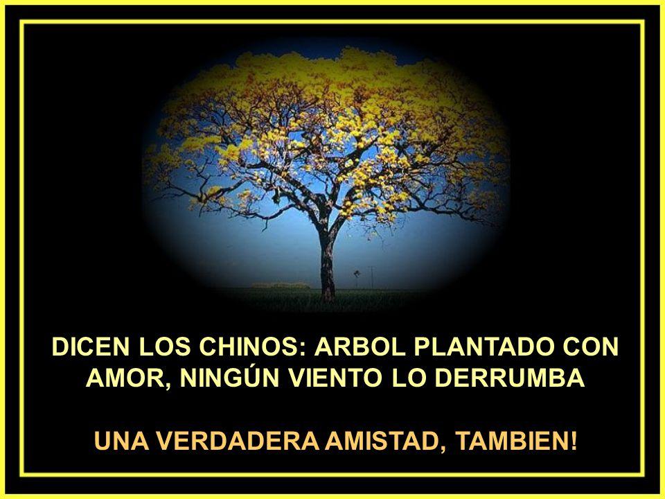 Un arbol no está de espaldas para nadie. Dé la vuelta en torno a él, y el árbol estará siempre de frente para usted... LOS VERDADEROS AMIGOS TAMBIÉN..