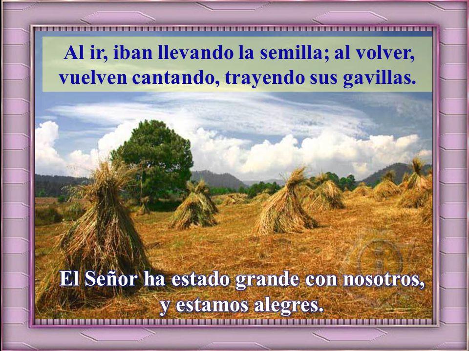 Que el Señor cambie nuestra suerte, como los torrentes del Négueb. Los que sembraban con lágrimas, cosechan entre cantares. El Señor ha estado grande