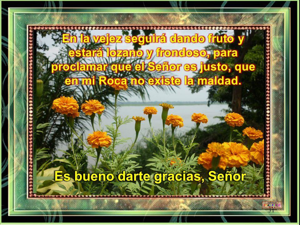 El justo crecerá como una palmera, se alzará como un cedro del Líbano; plantado en la casa del Señor, crecerá en los atrios de nuestro Dios.