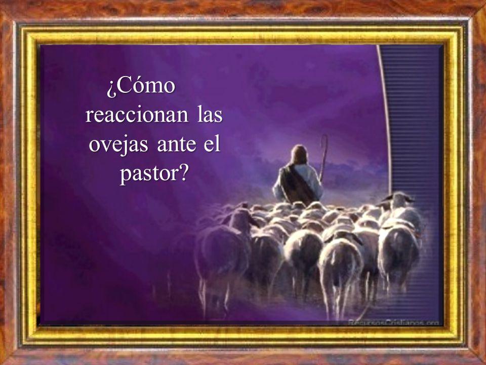 ¿Qué hace Jesús por sus ovejas para merecer el título de Buen Pastor?