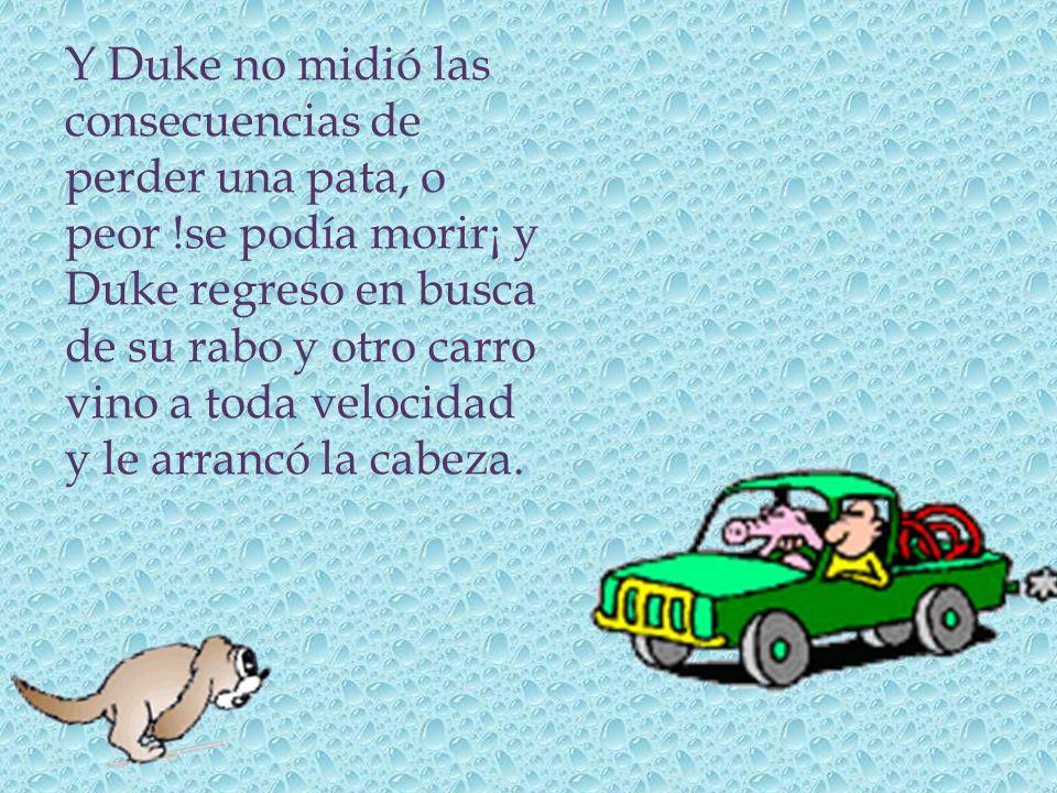 Y Duke no midió las consecuencias de perder una pata, o peor !se podía morir¡ y Duke regreso en busca de su rabo y otro carro vino a toda velocidad y