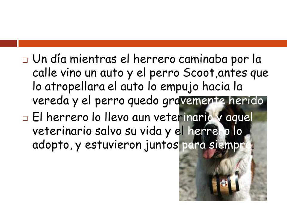 Un día mientras el herrero caminaba por la calle vino un auto y el perro Scoot,antes que lo atropellara el auto lo empujo hacia la vereda y el perro quedo gravemente herido.