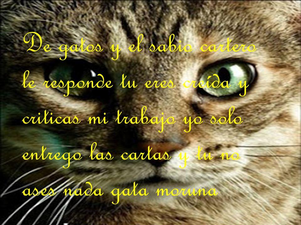 De gatos y el sabio cartero le responde tu eres creída y criticas mi trabajo yo solo entrego las cartas y tu no ases nada gata moruna
