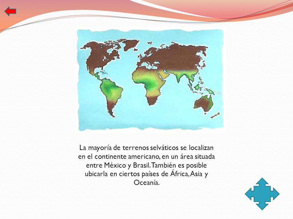 La mayoría de terrenos selváticos se localizan en el continente americano, en un área situada entre México y Brasil. También es posible ubicarla en ci