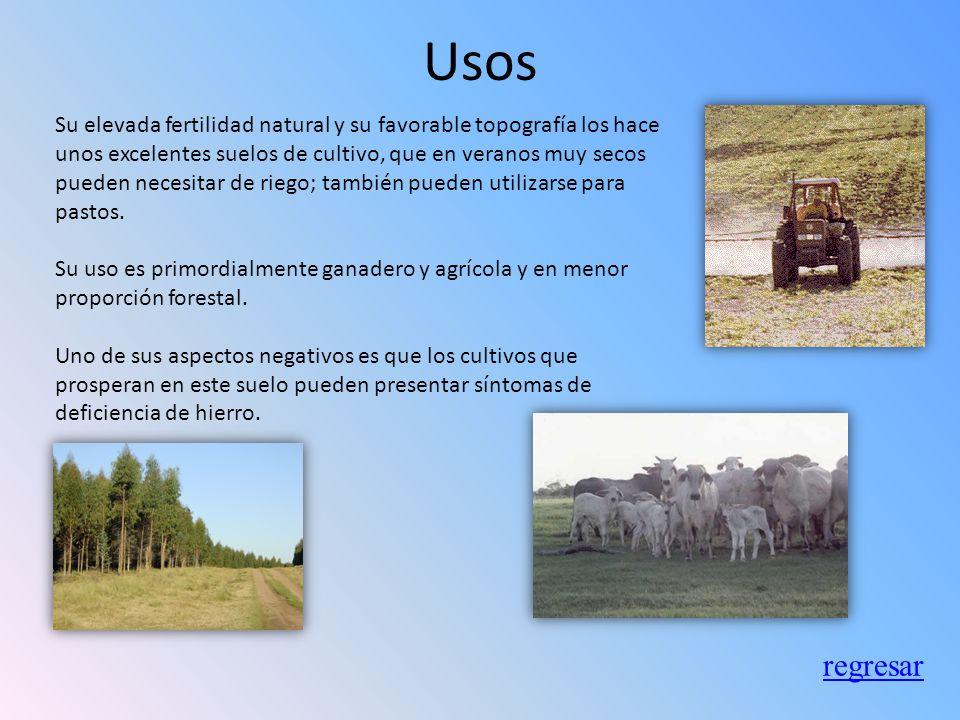 Ubicación Los suelos de estepa se desarrollan en climas continentales y mediterráneo subárido. El aporte de materia orgánica es muy alto, por lo que e