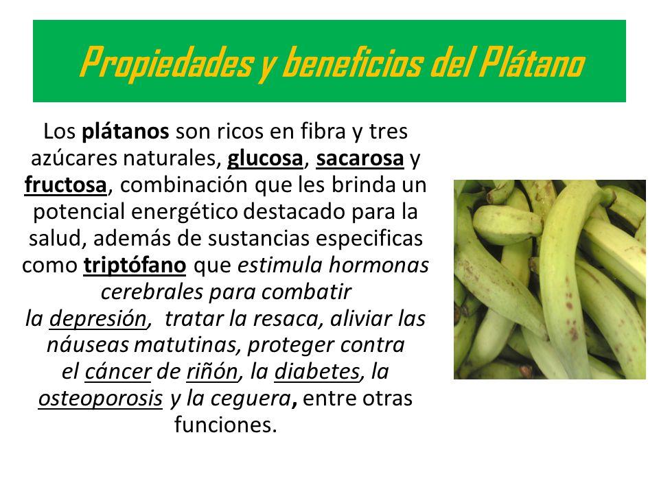 Propiedades y beneficios del Plátano Los plátanos son ricos en fibra y tres azúcares naturales, glucosa, sacarosa y fructosa, combinación que les brin