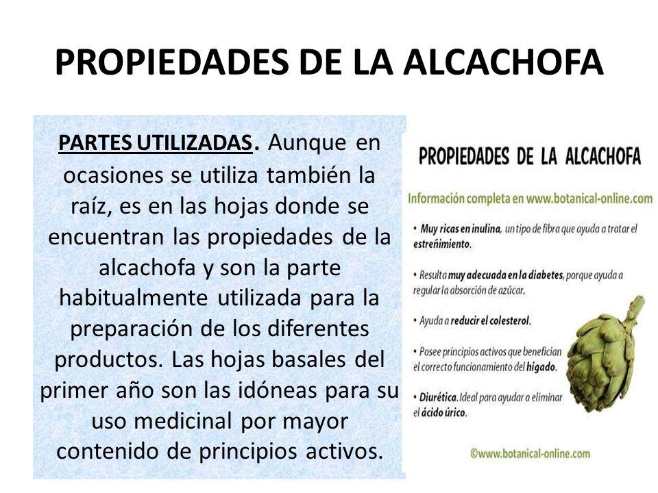 PROPIEDADES DE LA ALCACHOFA PARTES UTILIZADAS. Aunque en ocasiones se utiliza también la raíz, es en las hojas donde se encuentran las propiedades de