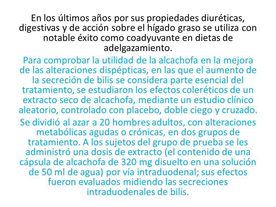 En los últimos años por sus propiedades diuréticas, digestivas y de acción sobre el hígado graso se utiliza con notable éxito como coadyuvante en diet