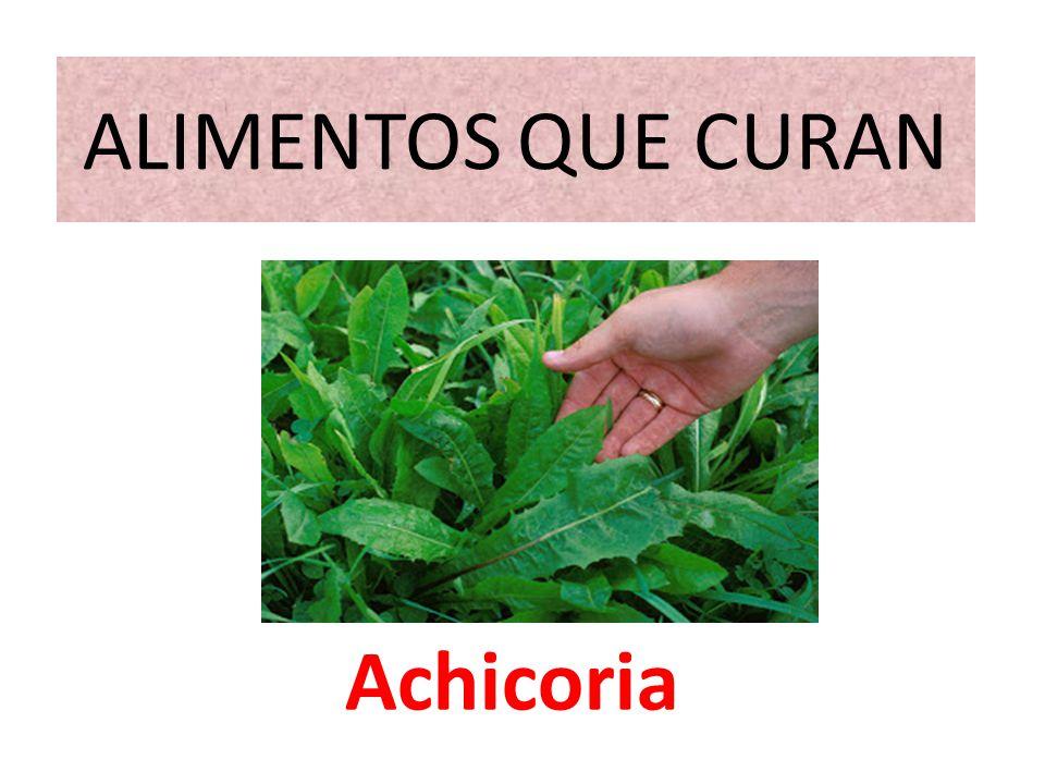 Beneficios y propiedades medicinales de la Achicoria El consumo principal de esta planta en la alimentación es en ensaladas, acompañada de otras variedades de lechuga, por su vistosidad y el contraste de su sabor ligeramente amargo.