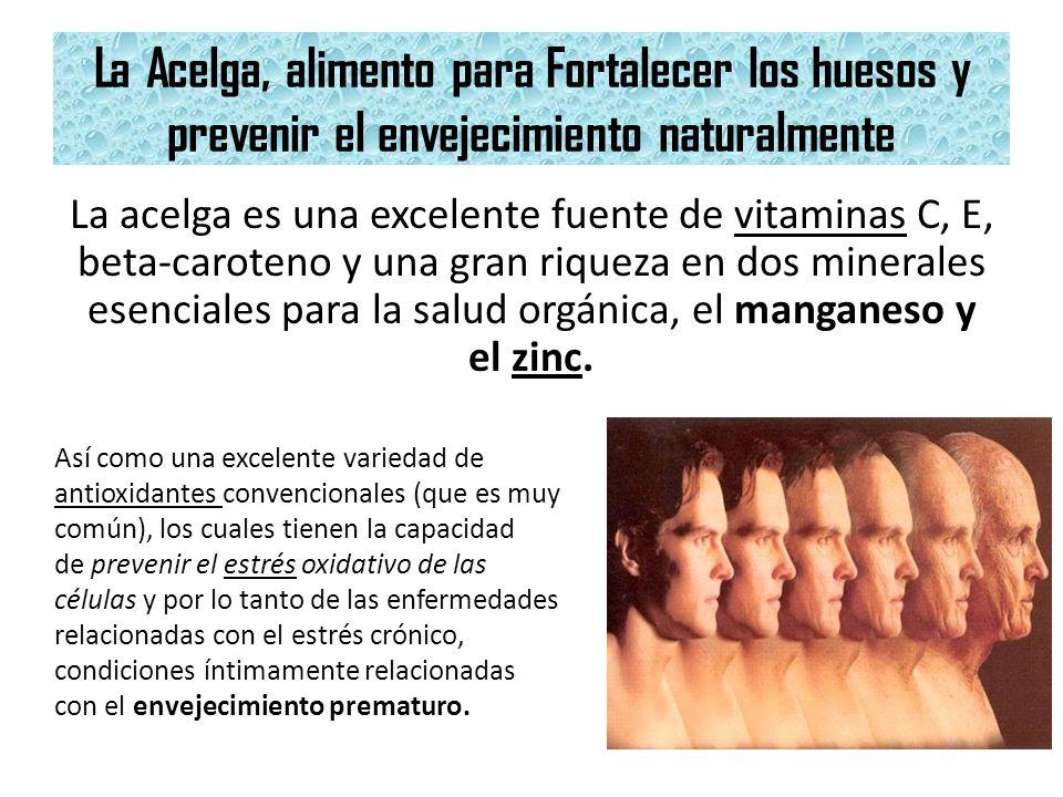 La Acelga, alimento para Fortalecer los huesos y prevenir el envejecimiento naturalmente La acelga es una excelente fuente de vitaminas C, E, beta-car