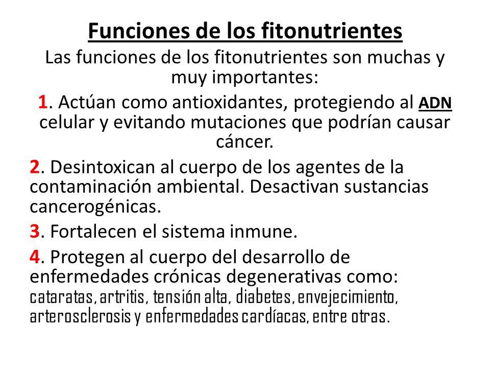 Funciones de los fitonutrientes Las funciones de los fitonutrientes son muchas y muy importantes: 1. Actúan como antioxidantes, protegiendo al ADN cel