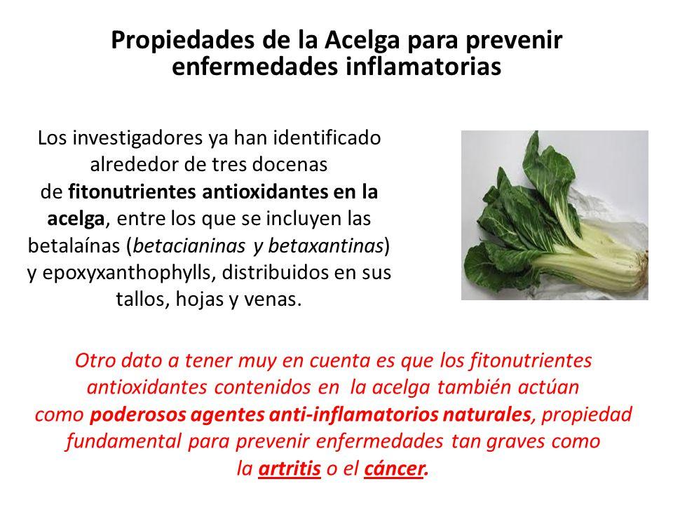 Propiedades de la Acelga para prevenir enfermedades inflamatorias Los investigadores ya han identificado alrededor de tres docenas de fitonutrientes antioxidantes en la acelga, entre los que se incluyen las betalaínas (betacianinas y betaxantinas) y epoxyxanthophylls, distribuidos en sus tallos, hojas y venas.