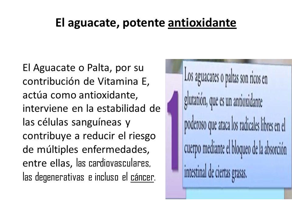 El aguacate, potente antioxidante El Aguacate o Palta, por su contribución de Vitamina E, actúa como antioxidante, interviene en la estabilidad de las