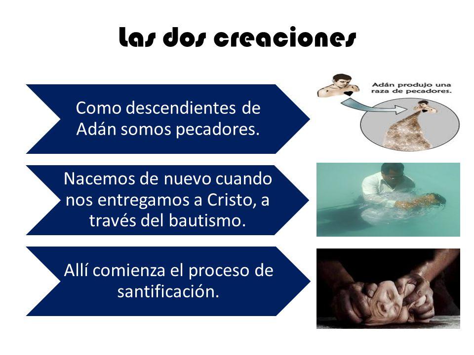 Las dos creaciones Como descendientes de Adán somos pecadores. Nacemos de nuevo cuando nos entregamos a Cristo, a través del bautismo. Allí comienza e