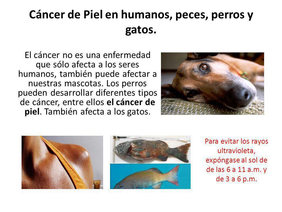 Cáncer de Piel en humanos, peces, perros y gatos.