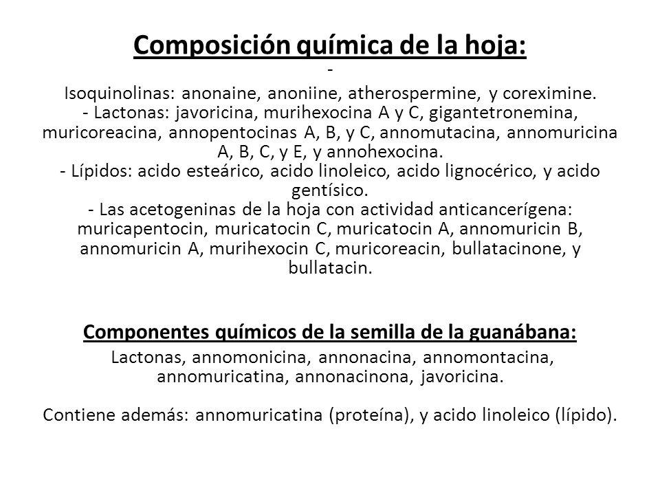 Composición química de la hoja: - Isoquinolinas: anonaine, anoniine, atherospermine, y coreximine.