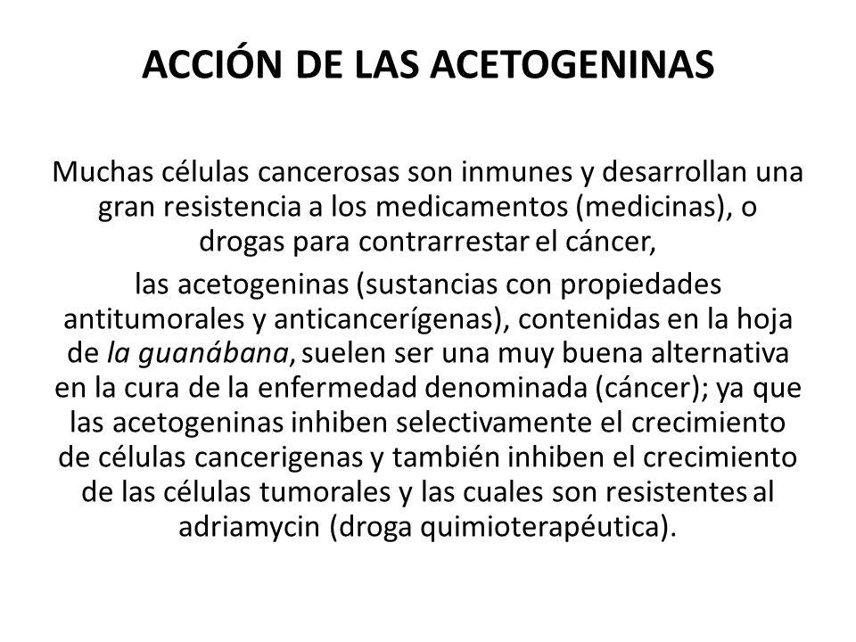 ACCIÓN DE LAS ACETOGENINAS Muchas células cancerosas son inmunes y desarrollan una gran resistencia a los medicamentos (medicinas), o drogas para contrarrestar el cáncer, las acetogeninas (sustancias con propiedades antitumorales y anticancerígenas), contenidas en la hoja de la guanábana, suelen ser una muy buena alternativa en la cura de la enfermedad denominada (cáncer); ya que las acetogeninas inhiben selectivamente el crecimiento de células cancerigenas y también inhiben el crecimiento de las células tumorales y las cuales son resistentes al adriamycin (droga quimioterapéutica).
