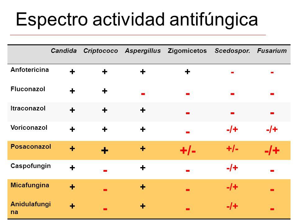 Espectro actividad antifúngica CandidaCriptococoAspergillusZigomicetosScedospor.Fusarium Anfotericina ++++-- Fluconazol ++ ---- Itraconazol +++ --- Vo