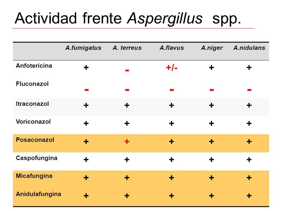 Actividad frente Aspergillus spp. A.fumigatusA. terreusA.flavusA.nigerA.nidulans Anfotericina + - +/-++ Fluconazol ----- Itraconazol +++++ Voriconazol